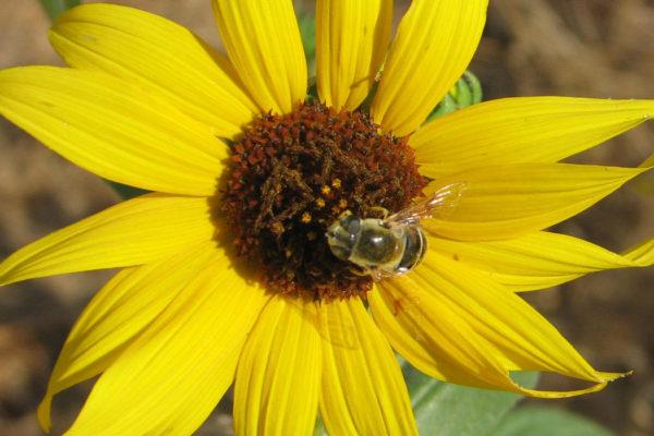 Insectary Habitat